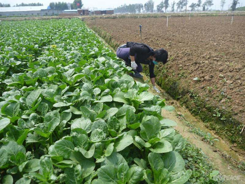 Guangdong farm