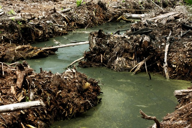 Drained Indonesian forests