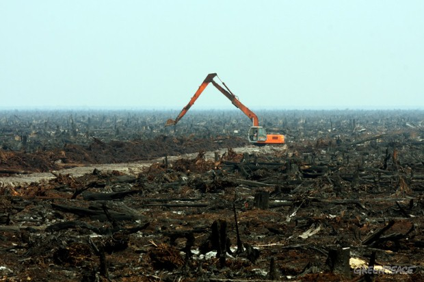 Drained peatland in Indonesia