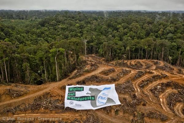 Action at P&G Palm Oil Supplier in Kalimantan