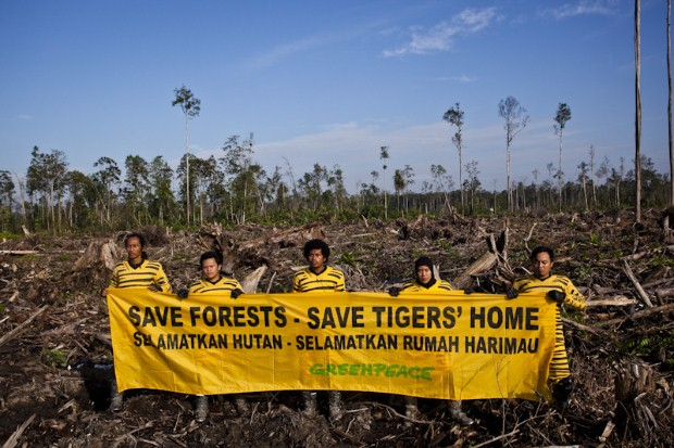 Greenpeace Find Forest Destruction Evidence in Second Day of 'Tiger's eye Tour'