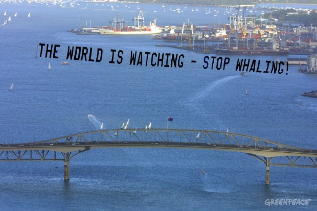 """The world is Watching - Stop Whaling"""