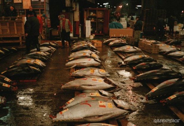 Southern Blue Fin Tuna on sale