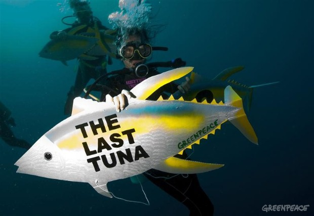 Urgent protection needed for tuna