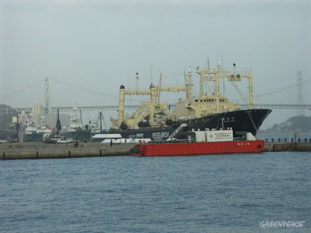The Japanese whaling fleet in port in Shimonoseki