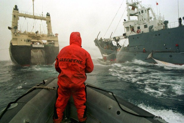 Greenpeace fights Japanese whaling