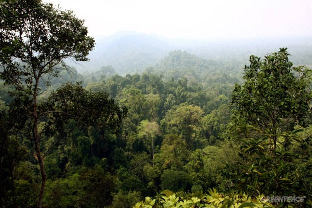 Pristine rainforest near Jambi