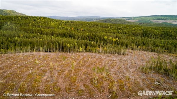 Aerial View of Forest and Clear Cut in Sweden