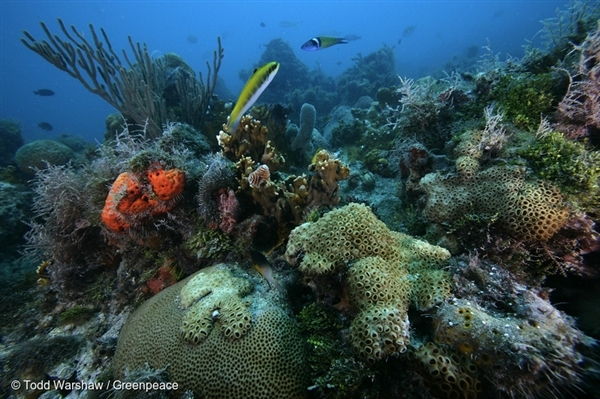 Underwater Life in Dry Tortugas National Park. 16 Aug, 2010 © Todd Warshaw / Greenpeace
