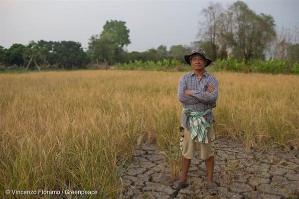 Luan Taejanang (58) stojí ve svém rýžovém poli, které není schopno dosáhnout zralosti kvůli intenzivní vlně veder v Hang Dong v provincii Chiang Mai v Thajsku. Ztrácí 100 % své úrody kvůli suchu způsobenému fenoménem El Niño.