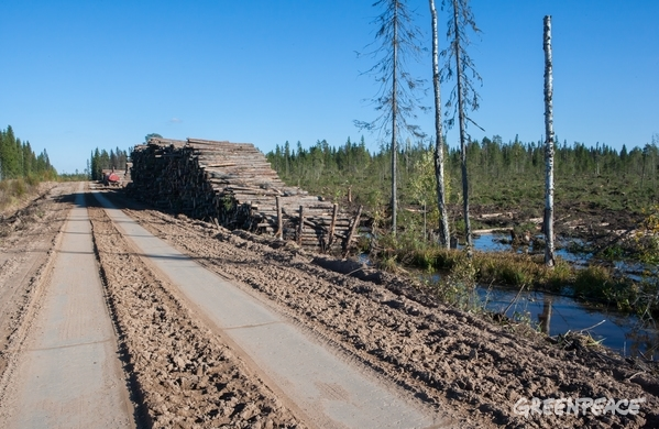 Průmyslová těžba v Archangelské oblasti, 13. 11. 2016. © Igor Podgorny / Greenpeace