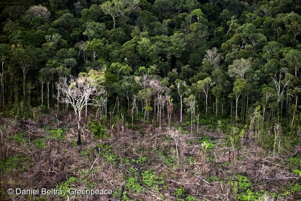 Manicoré district, Amazonas state. Recent deforestation in Santo Antonio de Matupi district, next to the Aripuanã National Forest and the Area of Environmental Protection of Manicoré Fields. 19 Feb, 2017  © Daniel Beltrá / Greenpeace