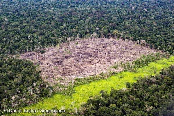 Aripuanã National Forest, Novo Aripuanã Amazonas state in the Brazilian Amazon. Recent deforestation. 19 Feb, 2017  © Daniel Beltrá / Greenpeace