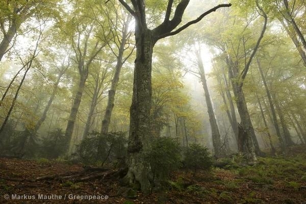 Trees in the Retezat National Park in the Carpathian Mountains.