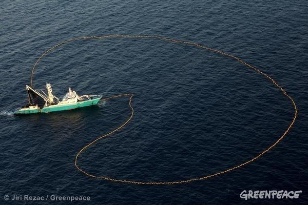 Purse Seiner Fishing in the Indian Ocean. 04/15/2013 © Jiri Rezac / Greenpeace