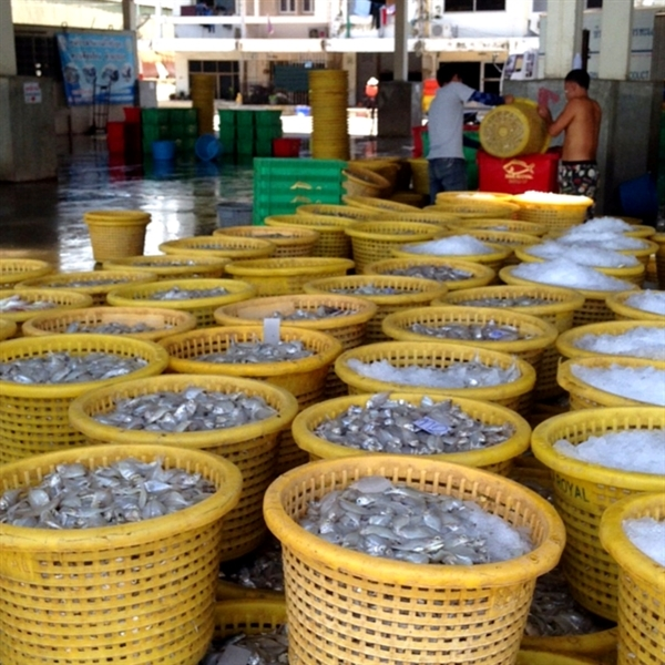 Shrimp at a fishing dock in Thailand. Provided by International Labor Rights Forum