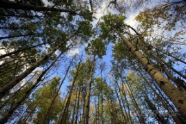The Canadian Boreal Forest Agreement encorporates 72 million hectares of forest
