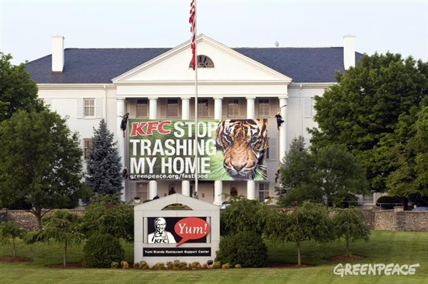 "Greenpeace activists place a banner on the front of a building at Yum! Brands international headquarters in Louisville. The banner exhibited a photo of an endangered Sumatran tiger and a message reading ""KFC Stop Trashing My Home."""