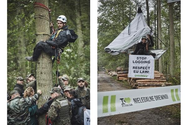 Activists Occupy Trees 06/09/2017 © Grzegorz Broniatowski / Greenpeace © Rafal Wojczal / Greenpeace