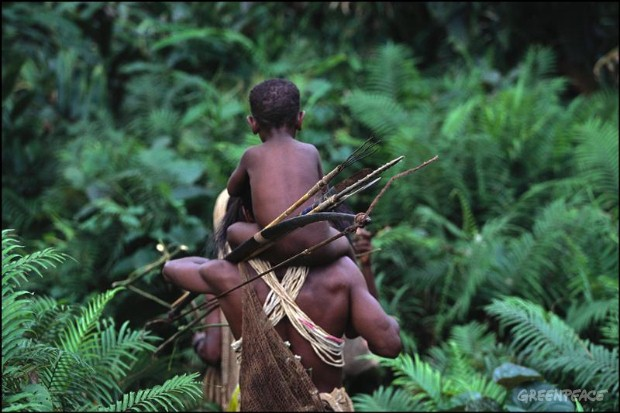 The ancient forests of Papua New Guinea