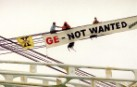 Greenpeace activists aboard the 'Federal Pescadores' carrying GE Soy