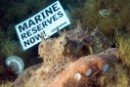 Marine Reserves in the Mediterranean now