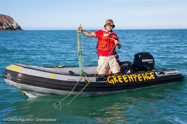 Greenpeace activists investigate the habitat of the endangered vaquita marina in the upper Gulf of California and locate illegal gillnets, which are contributing to the rapidly declining numbers of vaquita.