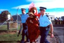 Police arrest a Greenpeace chickens blocking the entrance of the Tegel distribution centre
