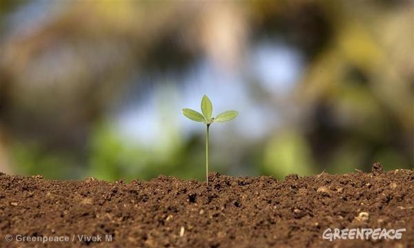 organic farming Greenpeace / Vivek M
