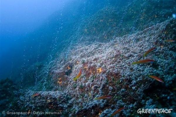 Hydrothermal Vents - Azores Deep Sea Life. © Greenpeace / Gavin Newman