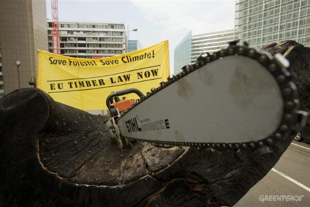 'Save forests, save climate - EU Timber law now'