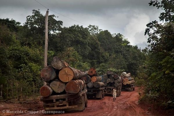 Logging Trucks in Para State. 27 Mar, 2014 © Marizilda Cruppe / Greenpeace