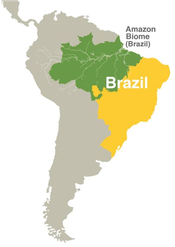 Amazon soya moratorium the importance of the amazon gumiabroncs Gallery