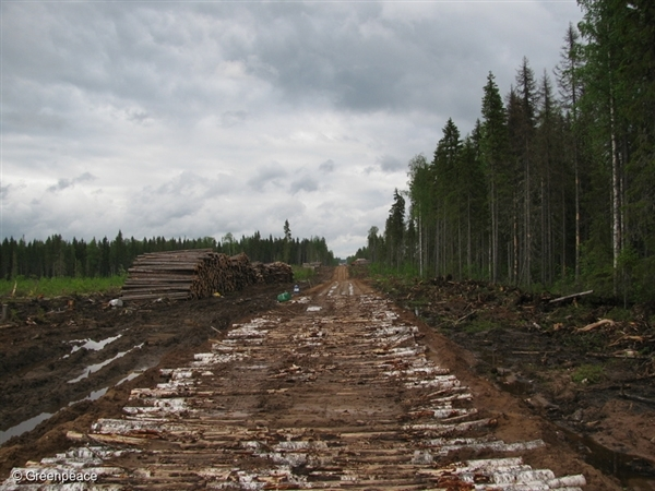 Road adjacent to large clearcut inside Dvinsky Forest (IFL) in the Solombabales concession area. 13 Jun, 2012 © Greenpeace