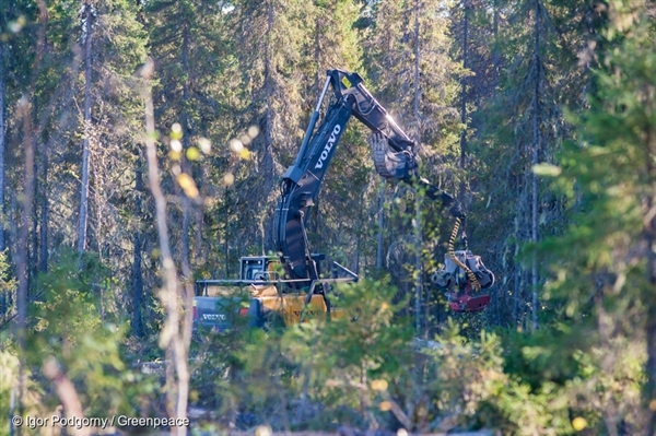 A harvester operating in an Intact Forest Landscape in Arkhangelsk Oblast, Russia. 13 Sep, 2016 © Igor Podgorny / Greenpeace