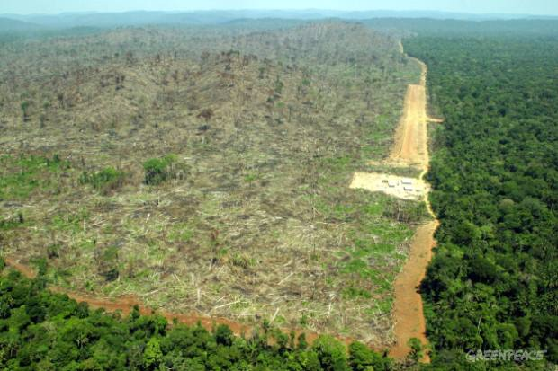 Illegal deforestation and land grabbing (grilagem) in the Middle Land, State of Pará