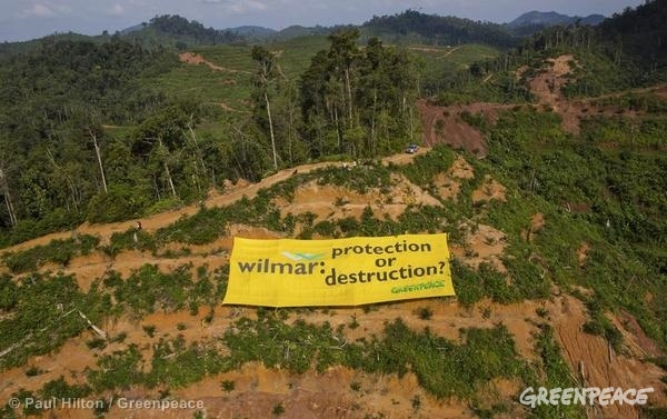 Banner at Wilmar Palm Oil Concession © Paul Hilton / Greenpeace