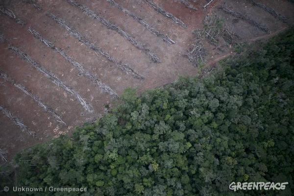Forest clearing for oil palm development inside PT Agriprima Cipta Persada (Ganda Group) in Papua. Greenpeace analysis of satellite images reveals large-scale deforestation within the concession continued in November 2013.
