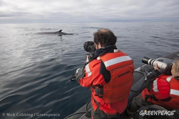 Documenting Seismic testing Barents Sea. 08/19/2014 © Nick Cobbing / Greenpeace