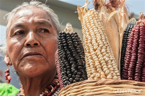 Corn National Day. 09/29/2013 © Greenpeace / Diego Uriarte