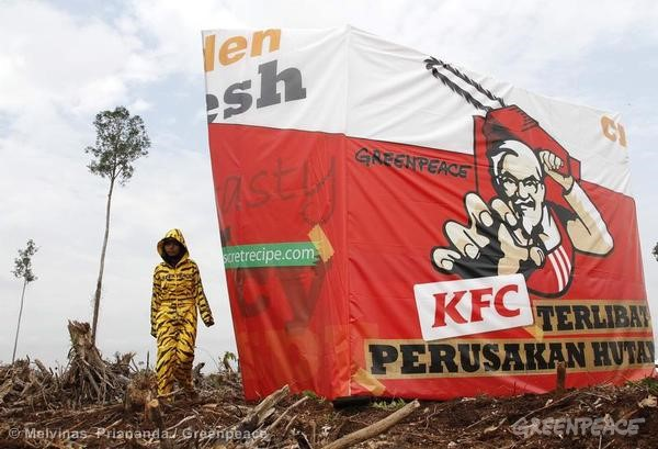 KFC Protest at APP Concession in Riau © Melvinas Priananda/Greenpeace