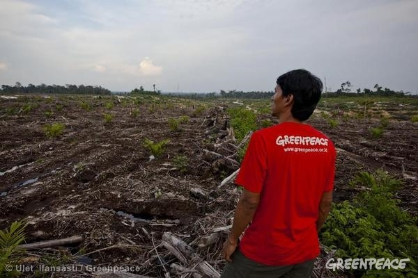 Greenpeace investigative team witnesses the newly cleared forest in an oil palm plantation owned by PT Wana Catur Jaya Utama concession, a subsidiary of BW Plantation, which is a palm oil supplier to Procter & Gamble in Central Kalimantan.