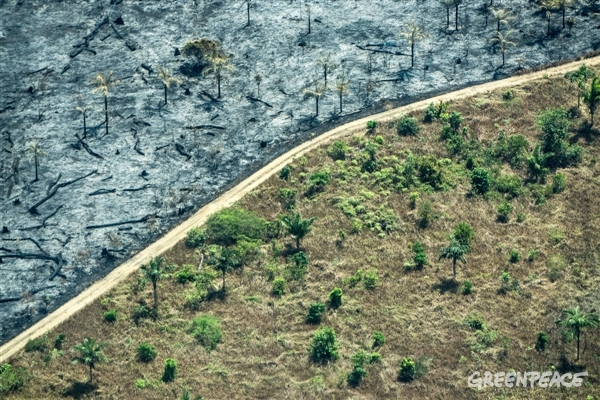 In August 2016, Greenpeace flew over the Brazilian Amazon to search for and record forest fires.This shows the level of deforestation, in Rondônia state, next to the capital Porto Velho. This year's forest fire season is already being considered one of the worst ever.