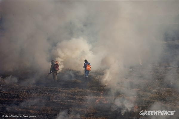 Greenpeace volunteers help suppress a wildfire near the Cossack village Berezanovskaya, Russia. The team was on its way back home when they witnessed the wildfire.