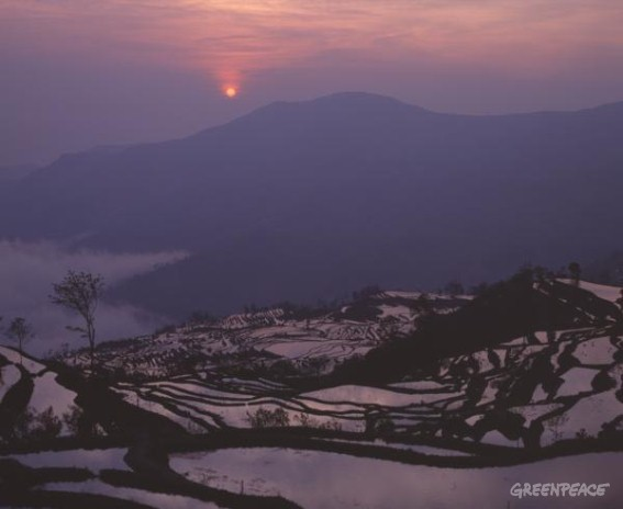 Rice fields at sunset in the Yunnan Province