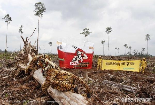 KFC Indonesian rainforest protest