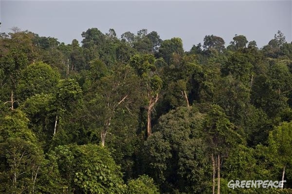 GAR's collabloration with Greenpeace and The Forest Trust will help protect forests such as the Tesso Nilo National Park.