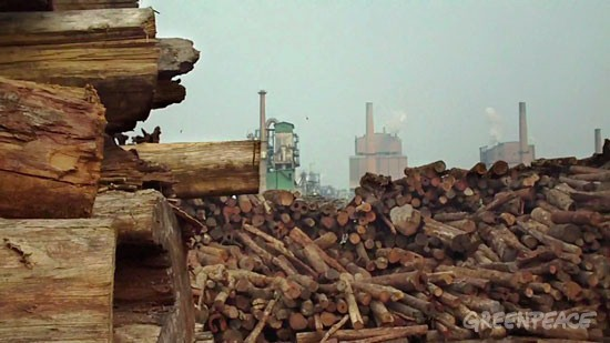 Stockpiles of rainforest logs at APP's Indah Kiat Perawang pulp mill.