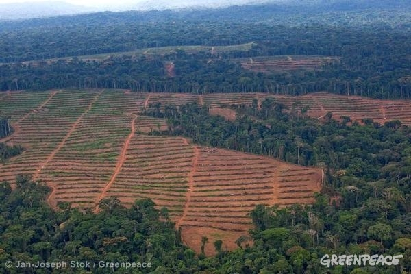 Aerial image of the oil palm nursery managed by Herakles Farms. Herakles Farms has previously claimed its project in the South West Region of the country would convert an area of little conservation value.