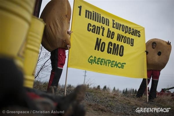 BASF GMO Protest in Sweden
